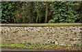 J2458 : Forest wall, Hillsborough (2) by Albert Bridge