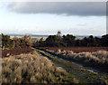 NY9812 : Estate road through West Plantation by Trevor Littlewood