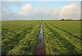 SS2014 : Footpath to Tonacombe by Bob Jones