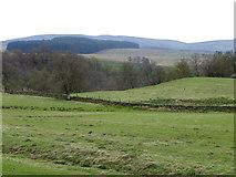 NN9539 : Molehills and Oystercatchers by Maigheach-gheal