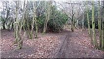 NT3071 : Path, Hunter's Hall by Richard Webb