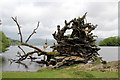 SD3896 : Fallen Tree, Windermere, Cumbria by Christine Matthews
