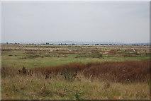 TQ7178 : Grazing marshes by N Chadwick