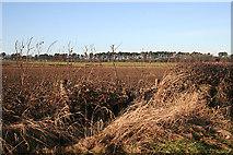 NT1474 : Near Wheatlands by Anne Burgess