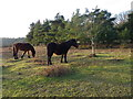 SU2212 : New Forest ponies near Cadman's Pool by Maigheach-gheal