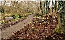 J3268 : Path improvements, Minnowburn, Belfast (1) by Albert Bridge