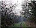 NS9394 : Track in Birkhill plantation by William Starkey