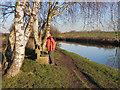 SJ7488 : Cheshire Canal Ring Walk, Dunham by David Dixon