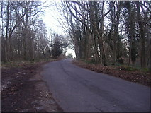 TQ1450 : Ranmore Common Road near Westhumble by David Howard