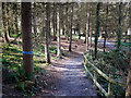 J4967 : Woodland path, Castle Espie by Rossographer