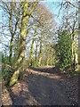 SP9109 : Ridgeway through the trees of Pavis Wood by Rob Farrow