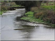 SU4828 : River Itchen from Garnier Road by Caroline Maynard