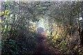 SJ5671 : The Delamere Loop near Hart Hill by Jeff Buck