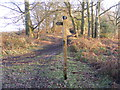SO8293 : Way Signpost by Gordon Griffiths