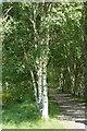 NY6860 : South Tyne Trail by Anthony Parkes
