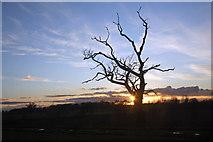 TL8063 : Dead tree in the sunset by Bob Jones