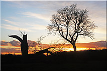 TL8063 : Dead oak and living oak silhouetted in the sunset by Bob Jones