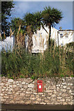 SX9064 : Post box, pampas and palms by Richard Dorrell