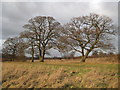 TQ1294 : Bushey: Merry Hill by Nigel Cox