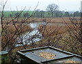 SK4569 : Bird table in the Carr Vale reserve by Andrew Hill