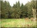 SX5196 : Plantation on Scobchester Down by Derek Harper