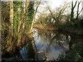 SY0783 : Pool on drainage channel, South Farm Road by Derek Harper