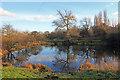 SE3308 : Tinker's Pond by Martin Lee
