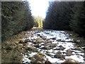 NN9149 : Balnaguard Burn tributary by AllanKnaik