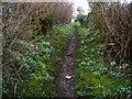 SD6078 : Snowdrop lined footpath entering Low Biggins by John H Darch