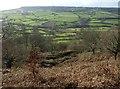 ST1703 : Western slopes of Dumpdon Hill by Derek Harper