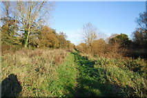 TR1859 : Footpath along the Great Stour by N Chadwick
