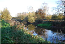 TR1859 : Great Stour by N Chadwick