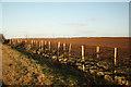 SK6164 : East Field by Richard Croft