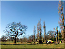 TQ3095 : Felling of Poplar Trees, Oakwood Park, London N14 by Christine Matthews