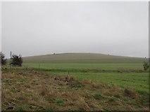 SU5382 : First sight of Lowbury Hill by Bill Nicholls