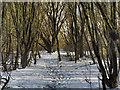 SD7807 : Path Through the Trees by David Dixon
