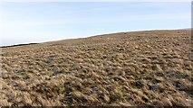 NN8403 : On Glentye Hill by Richard Webb