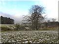 SJ9683 : Lyme Park by David Dixon