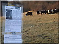 TQ0448 : Cattle Grazing by Colin Smith