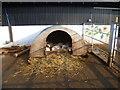 TQ3679 : Piglets at Surrey Docks Farm by Marathon