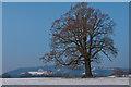 TQ2251 : Bare tree  by Ian Capper