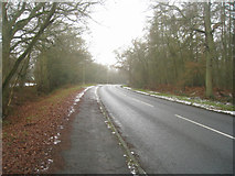 SU7953 : Hitches Lane by Long Copse by Sandy B