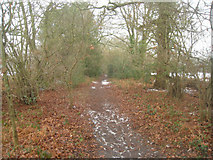 SU7953 : Path between playing fields by Sandy B