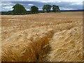 NZ0612 : Farmland, Brignall by Andrew Smith