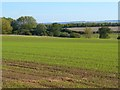 SP6201 : Farmland, Little Milton by Andrew Smith