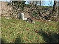 ST9723 : The churchyard cat by Jonathan Kington