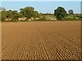 SP6404 : Farmland, Waterstock by Andrew Smith