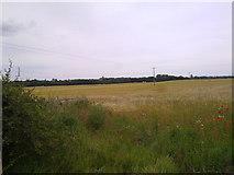 NZ3427 : View across the fields towards Sedgefield by Robert Graham