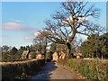 SJ8383 : Apprentice Lane, Styal by David Dixon