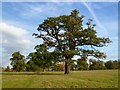 SP7104 : Parkland, Thame by Andrew Smith
